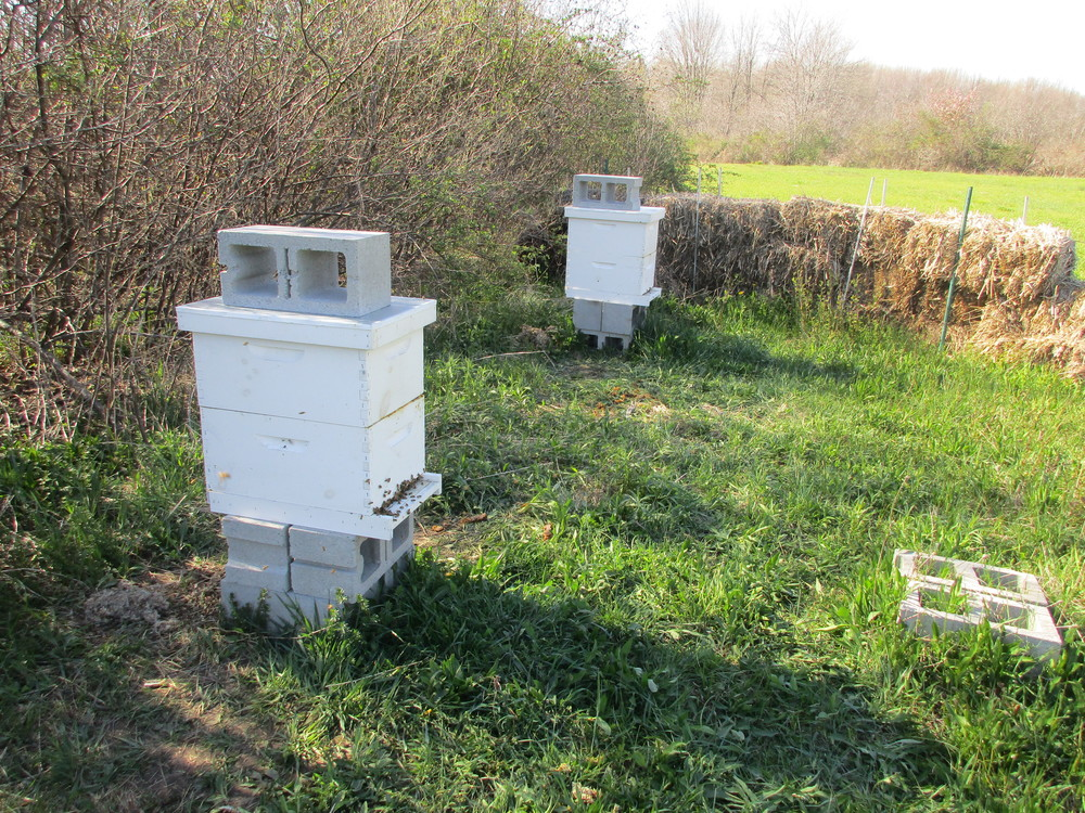 Both hives reversed, leveled, mouse guards removed, and I'm DONE!