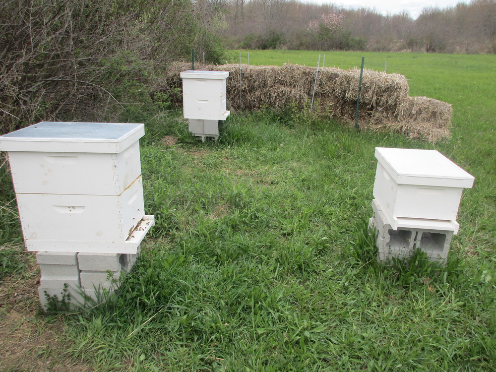 Now three hives!