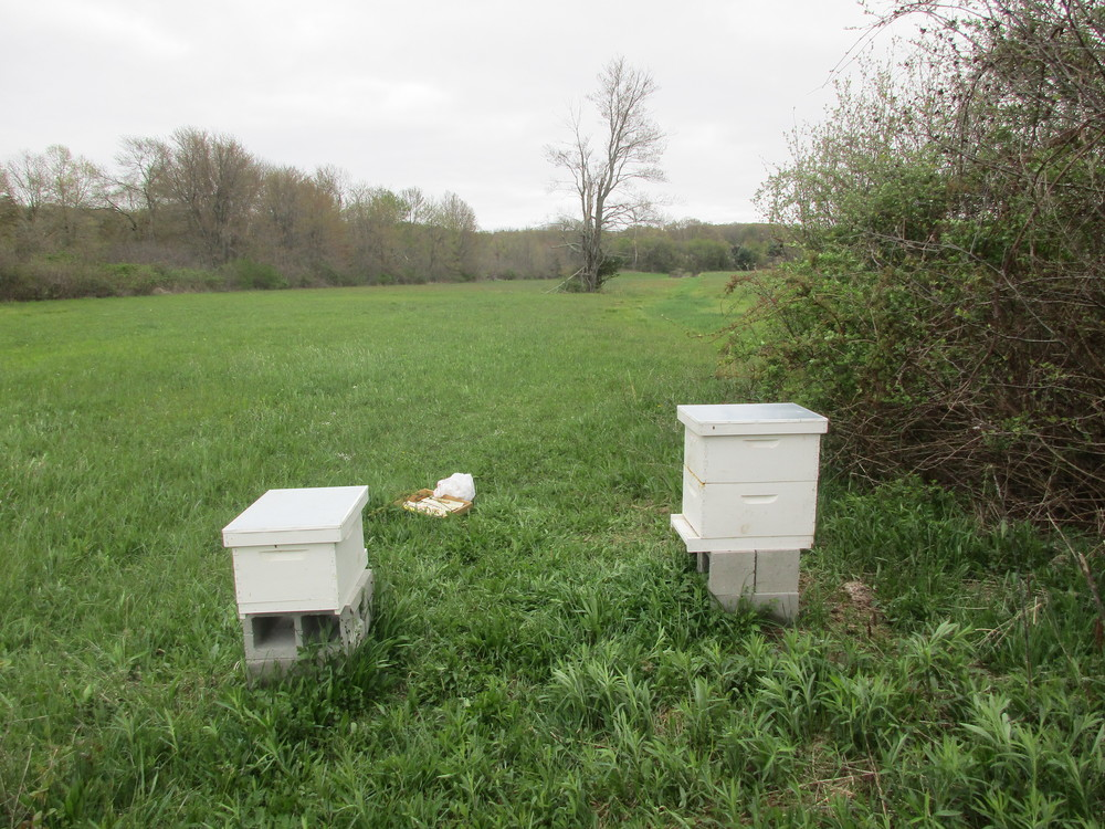 Thursday May 5th. Hives 3 (left) and 1.