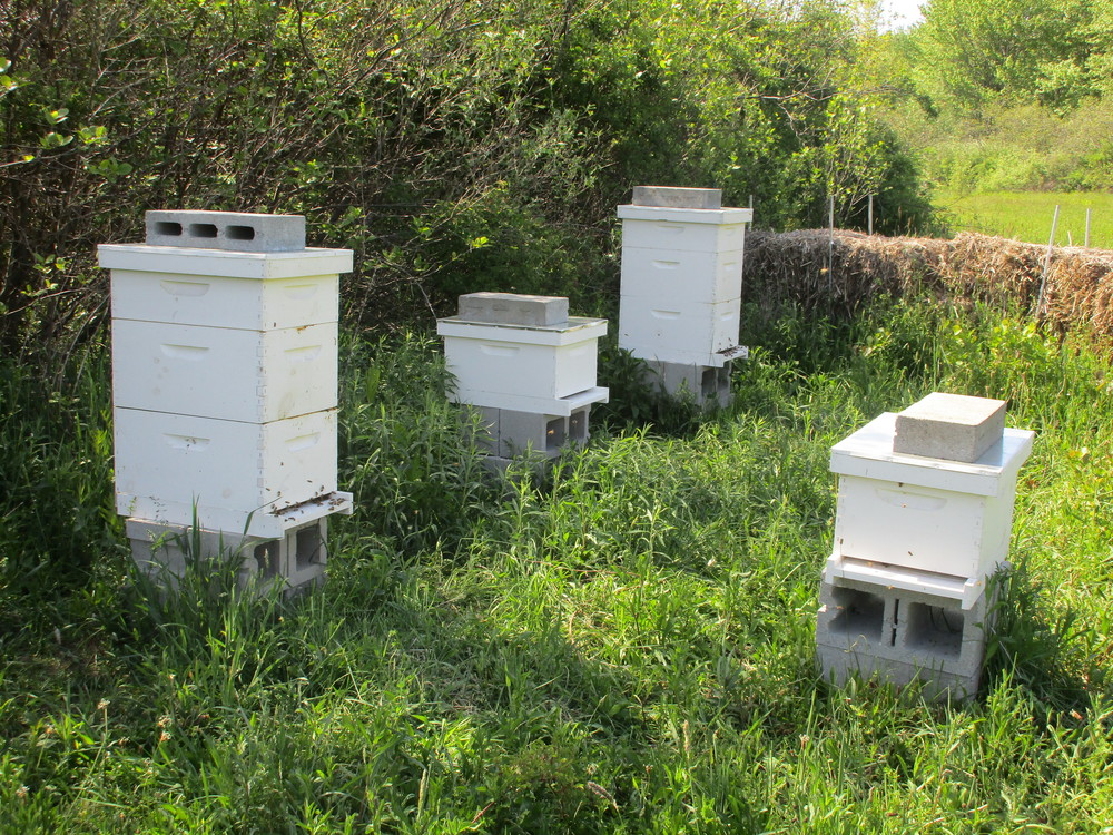 Four happy hives and one happy beekeeper (taking the picture).