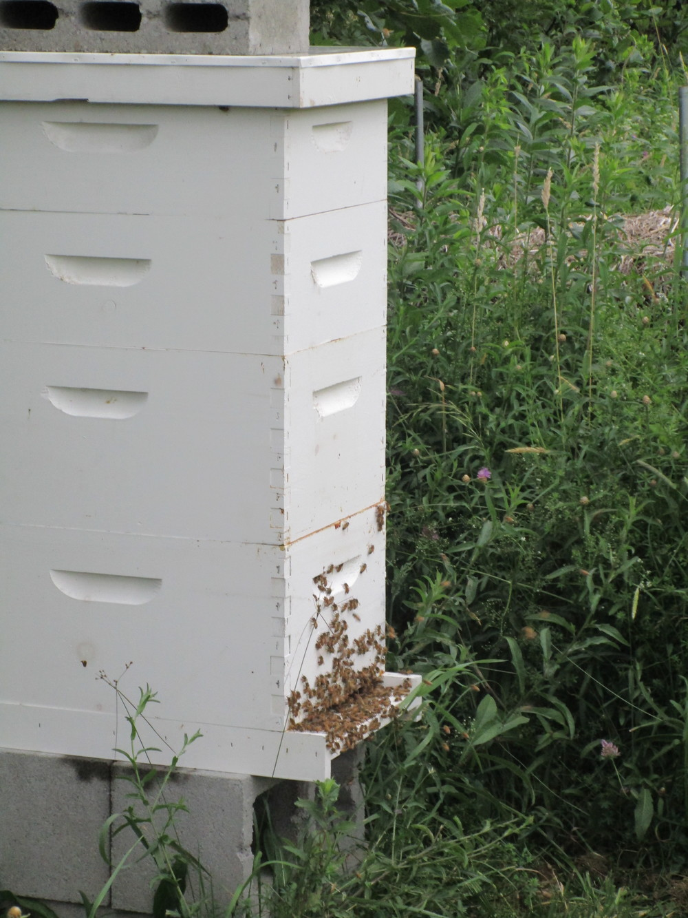 Hive with 2 honey supers (the shorter boxes on the top)
