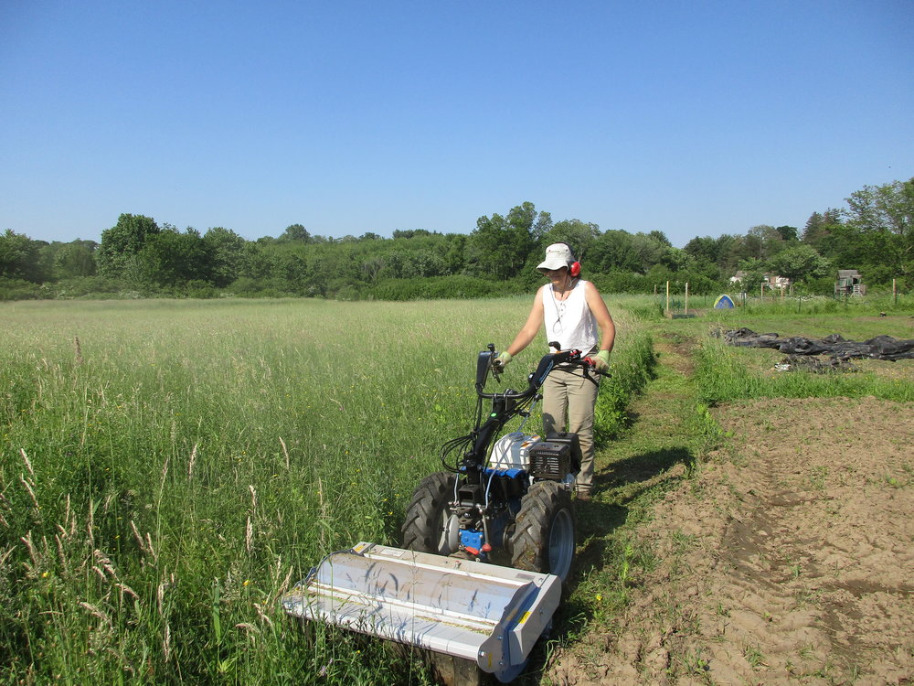 June 2017. Jennifer trying out the new flail mower. Finally some control over the weed situation!