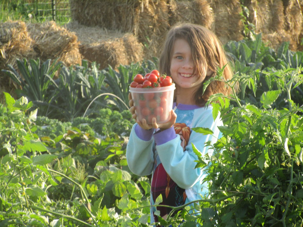 Sept 2017. Desta (in Frozen pyjamas) helping harvesting cherry tomatoes.
