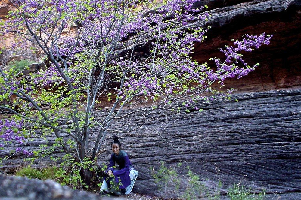 4, Grand Canyon 2004.JPG