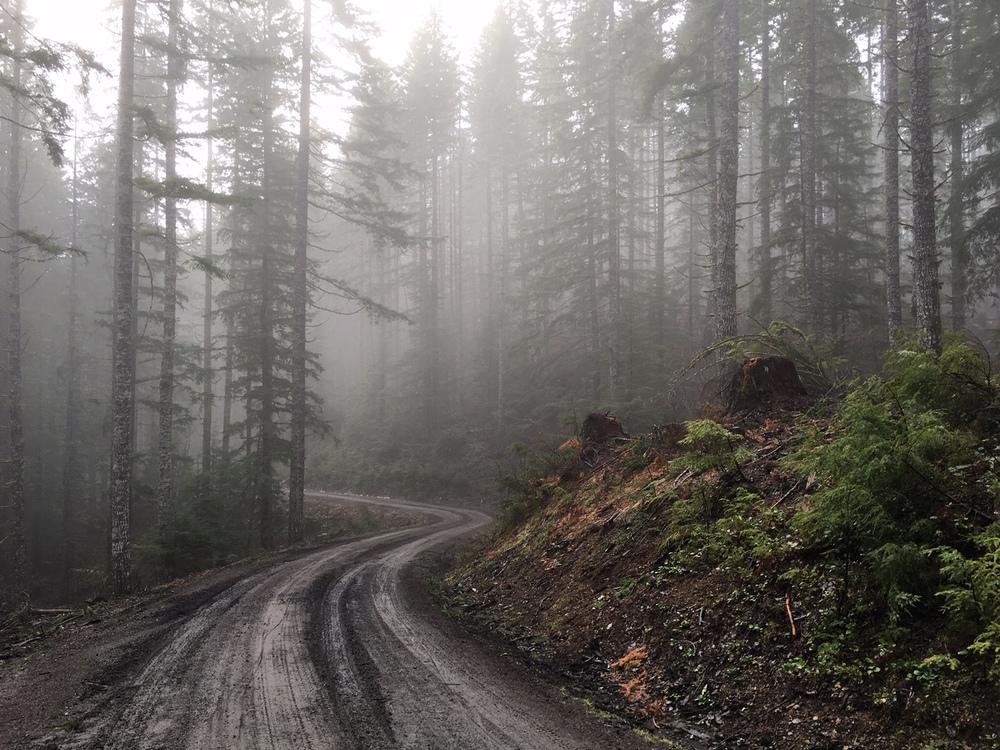 Timber Logjam V1 -