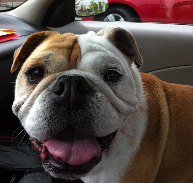BulldogHavenNW_Mosey.jpeg