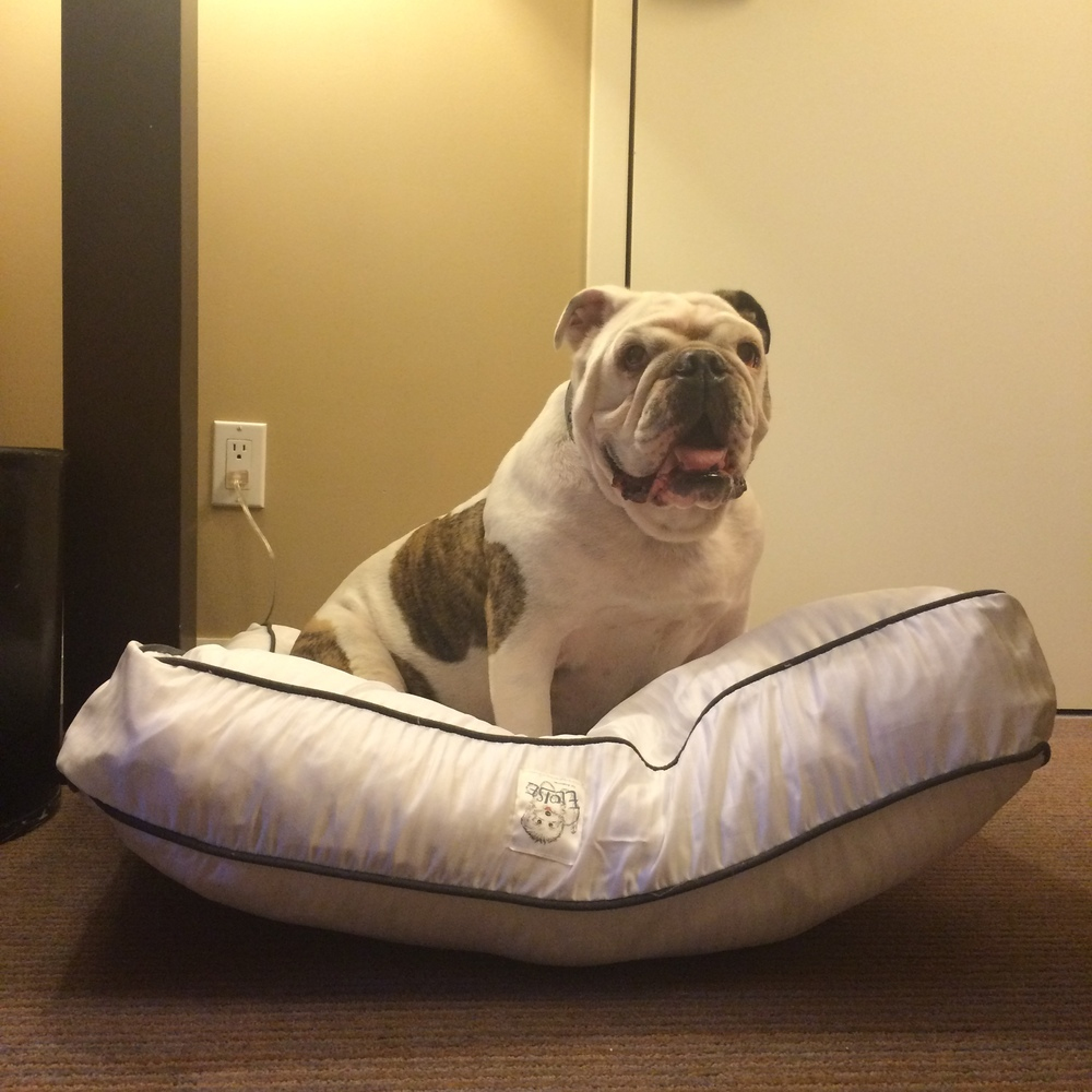 Heavenly Dog Bed just for me!