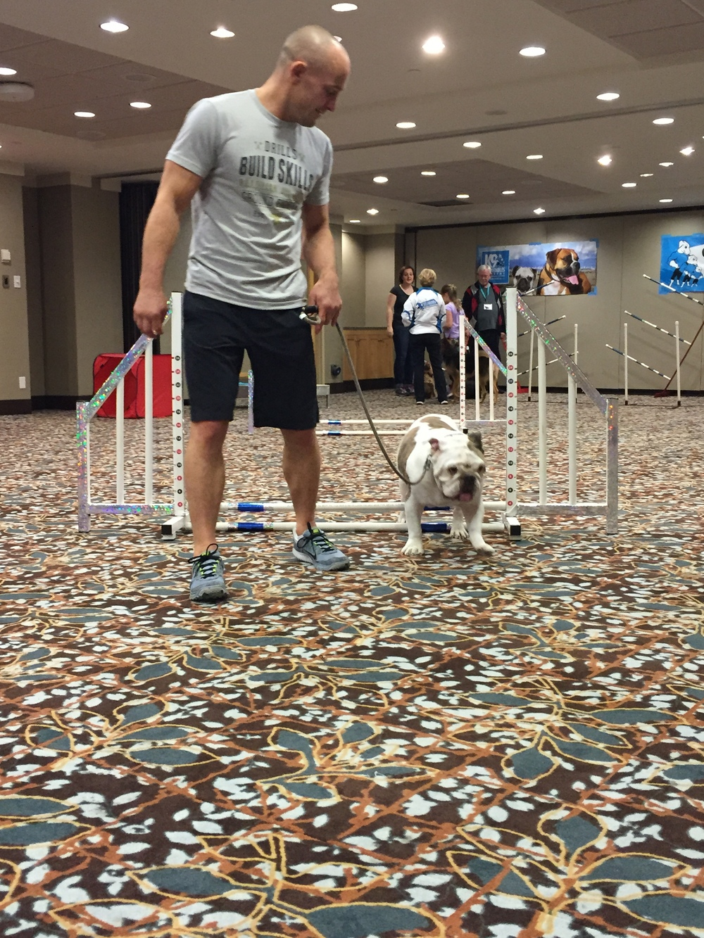 Spike mastering K9Incredibles Agility workshop!