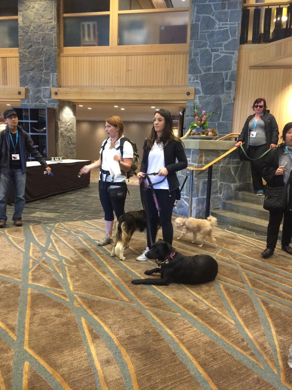 The Alpine Dogs team