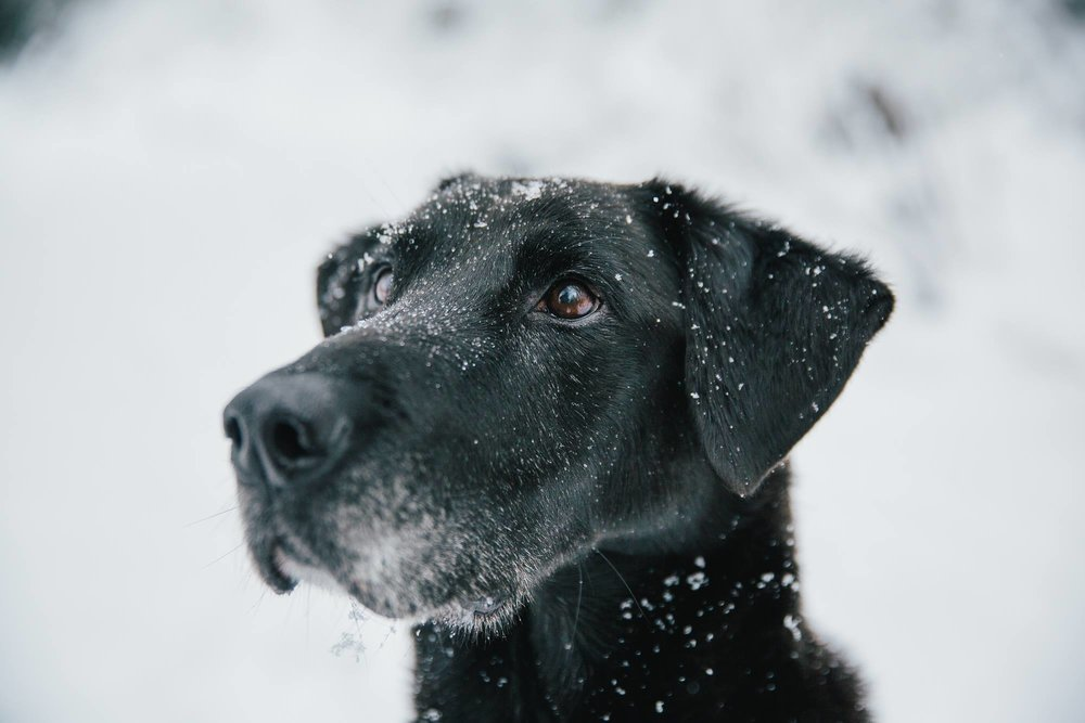 Image via Canine Happy Hour at Filson