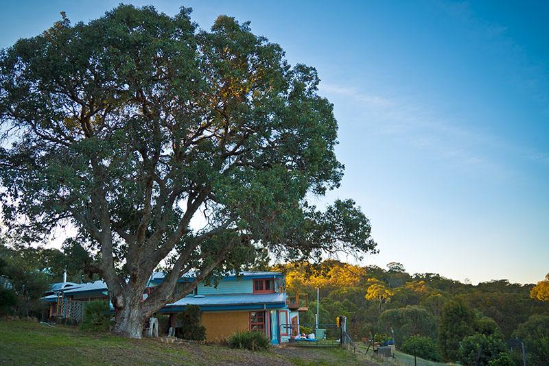 House + Glen's tree.jpg