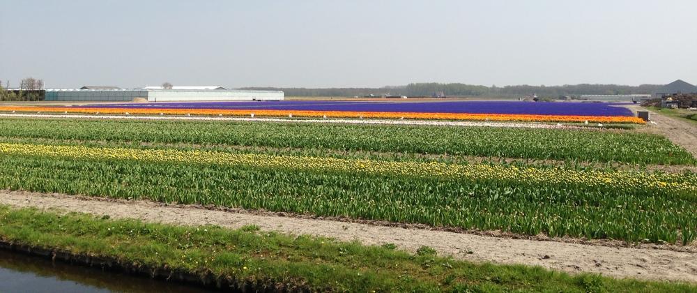 holland25