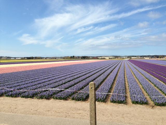 inspiration, holland, amsterdam, aalsmer, keukenhof, forår, tulipaner, hyacenter,