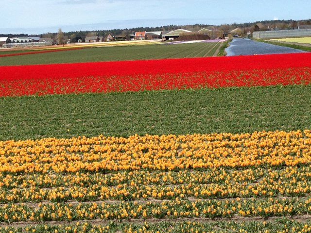 holland, amsterdam, aalsmer, keukenhof, forår, tulipaner, hyacenter,