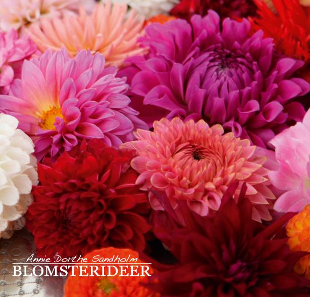 georginer, blomsterdekoration, blomsterinspiration, blomster