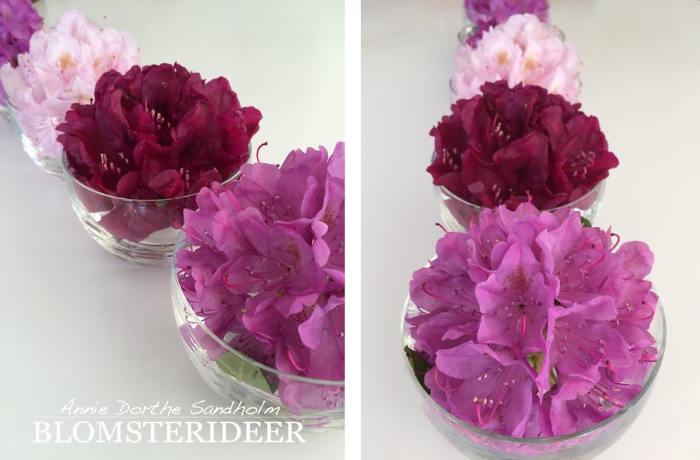 rododendron, blomsterdekoration, blomsteriéer, borddekoration