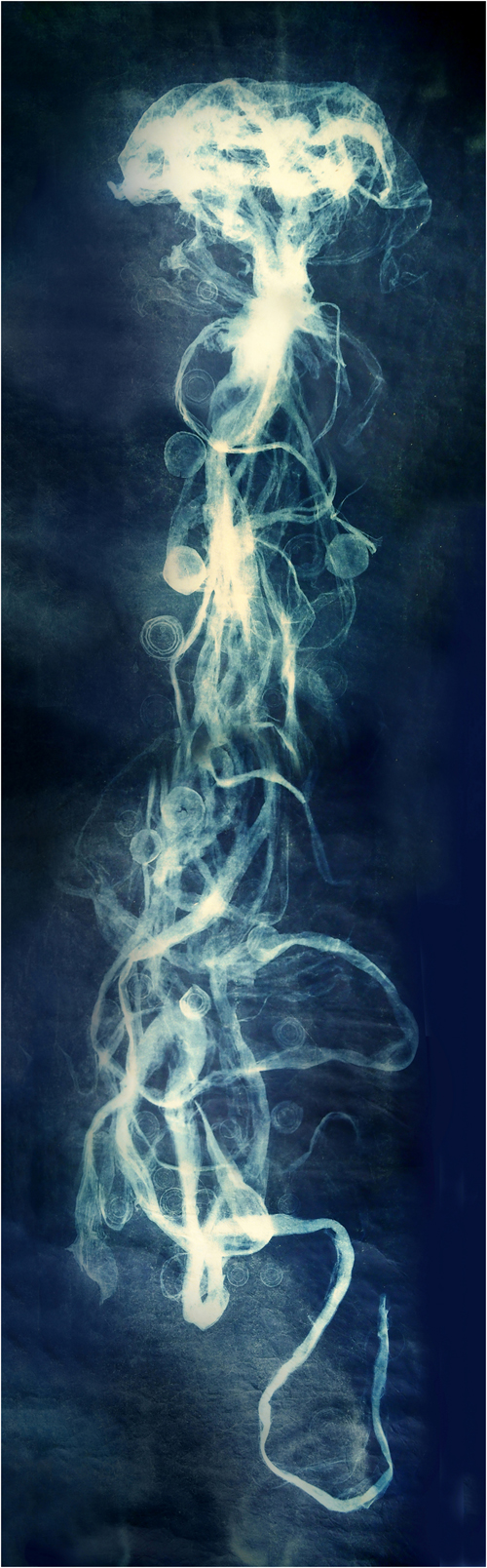 Tangled Up in Blue, Mary Ittner, Cyanotype