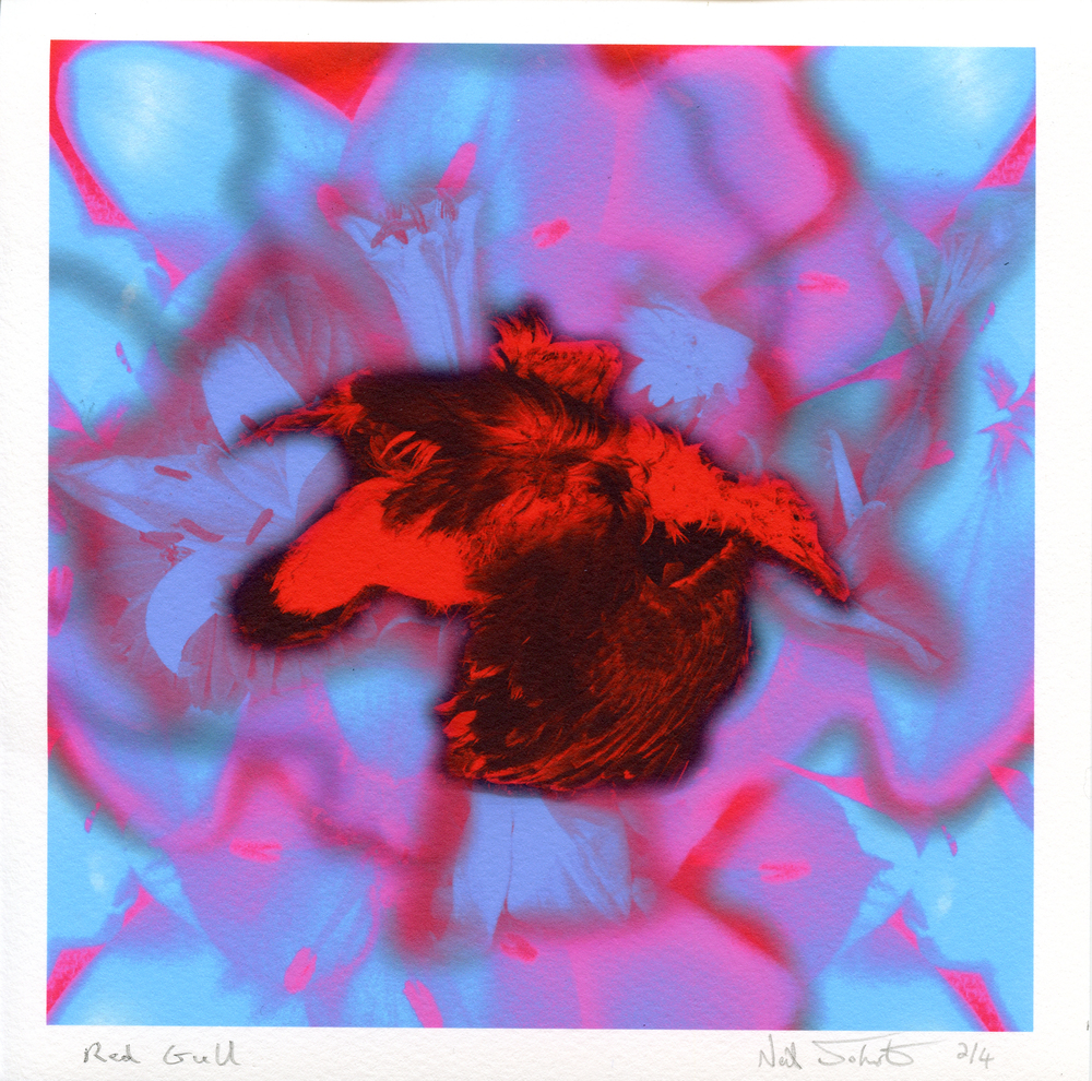 Johnstone, Neil: Red Gull archival inkjet