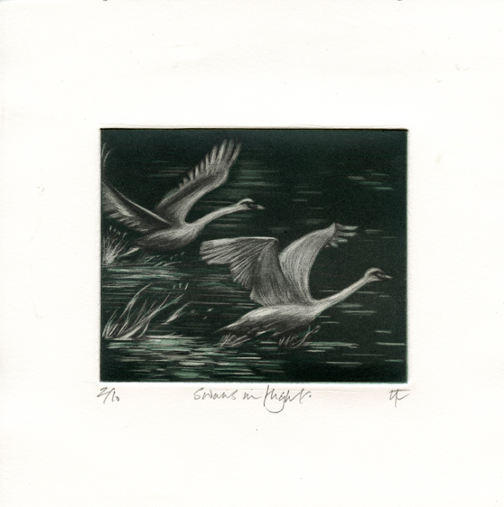Tait, Nikki: Swans in Flight mezzotint