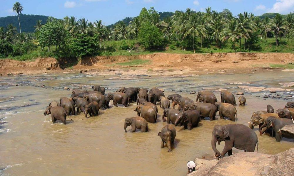 L     anka Run | Sri Lanka | 2013 11