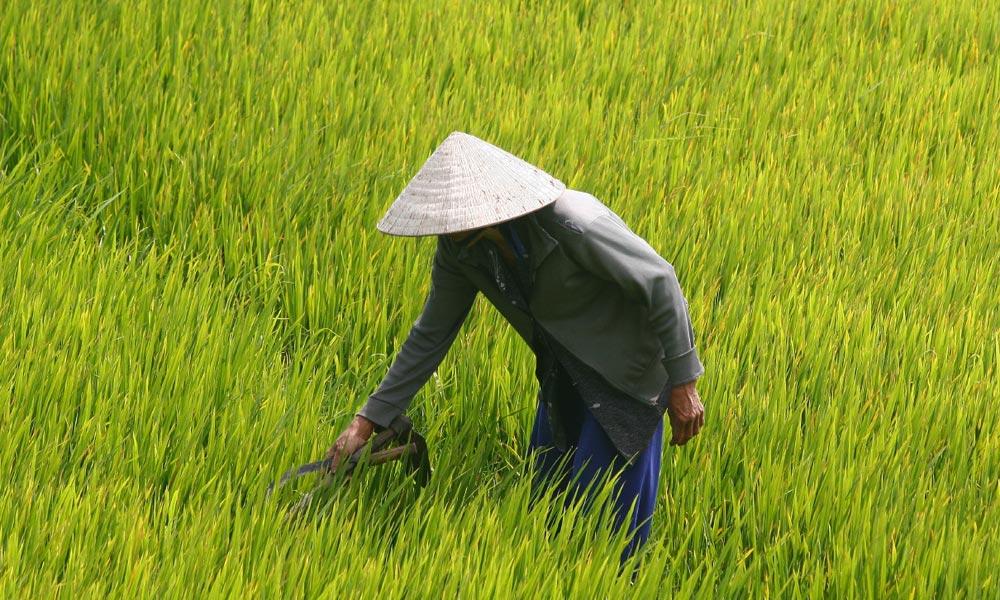 HoChiMinh | Vietnam | 2013 02
