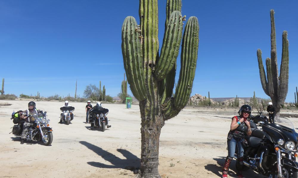 Kaktusten varjoon!