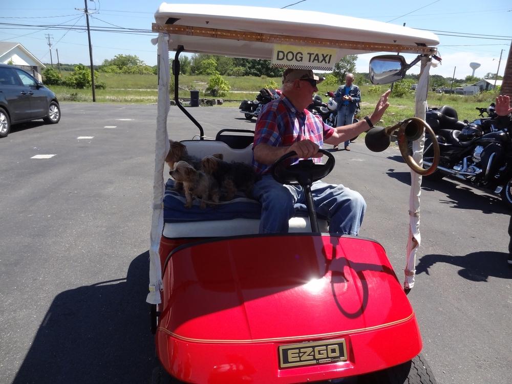 Museohuoltamon pihassa poikkesi golfautolla pikavisiitillä paikallinen papparainen kolmen pikku Yorkshireterrierinsä kanssa. Tämä olikin sitten ihan oikea koirataksi...