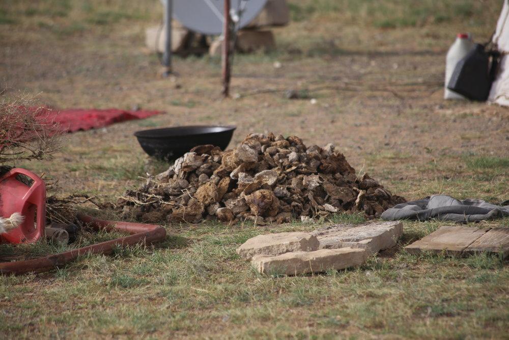 Polttopuista on loputtomilla aroilla kova puute, joten Kamelin papanat saavat kelvata...