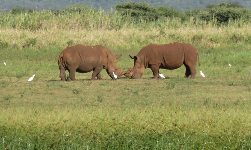 #sarvikuono #safari #eteläafrikka