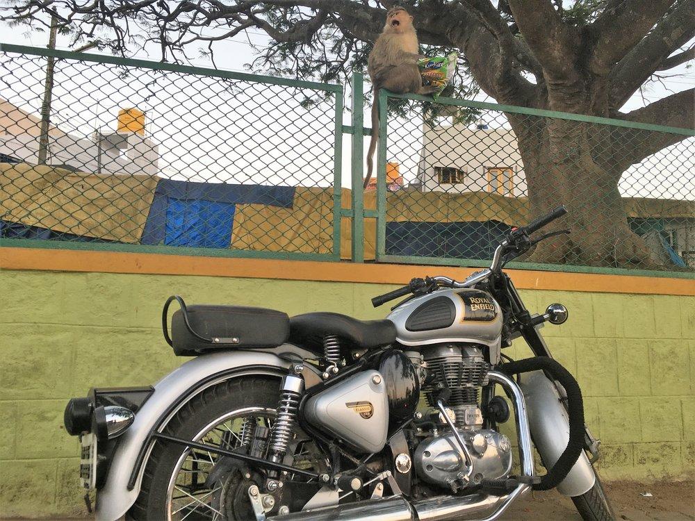 Pyörä ja apina - norminäky Intiassa :)