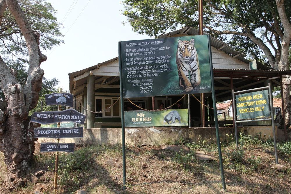 Intiantiikeri eli bengalintiikeri on tiikerin uhanalainen alalaji. Siitä tavataan myös valkoista värimuotoa, jota kutsutaan rewantiikeriksi.  Intiantiikeriuroksen pituus kuonon päästä hännän päähän on 2,7–3,1 metriä ja se painaa 180–260 kilogrammaa. Säkäkorkeutta Intiantiikerillä on noin 120 senttimetriä. Valkeat laikut korvien takana auttavat tiikereitä näkemään toisensa yön pimeydessä. Tiikeri on hyvin harteikas ja sen etujalat ovat suuret, joten se pystyy kaatamaan kookkaankin saaliseläimen. Vahvat leuat ja pitkät raateluhampaat helpottavat tarttumista saaliiseen. Valtavilla tassuillaan tiikeri voi kellistää saaliseläimen yhdellä iskulla.  Tällä kaverilla ei ole muita luonnollisia vihollisia kuin ihminen, lähinnä salametsästäjät!