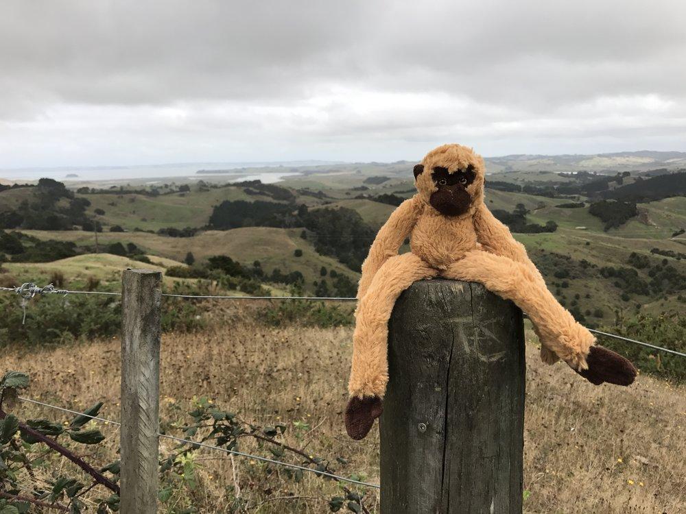 Kepin nokassa jossain päin häkellyttävän kaunista Uusi-Seelantia.