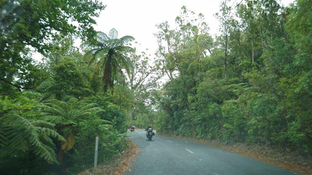 Waipua Kauri Forest