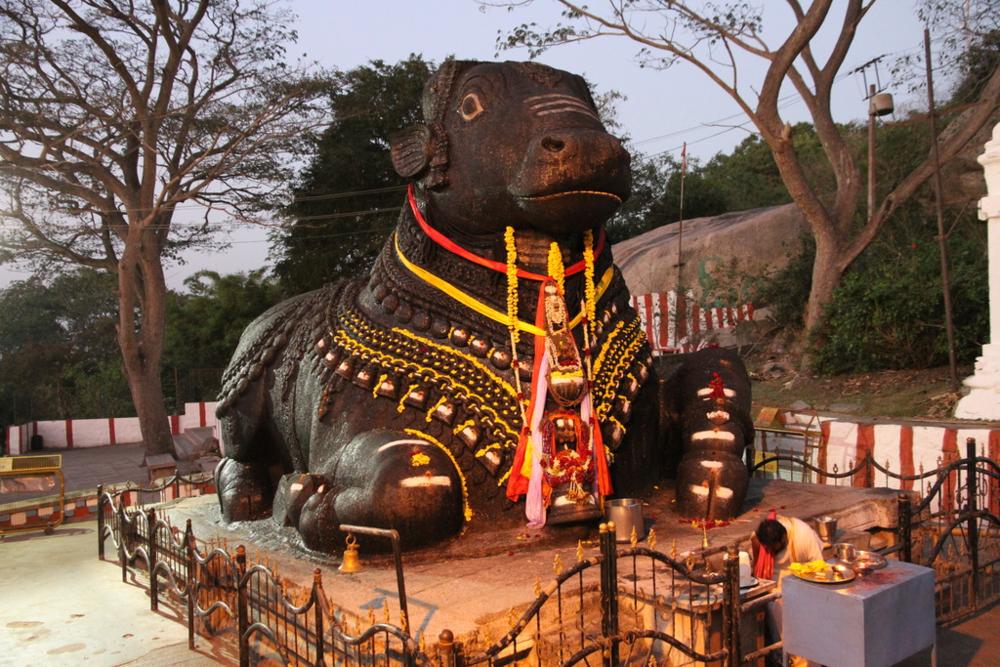 """Temppelin jälkeen kävimme vielä lähistöllä olevan """"Nandi"""" lehmän luona. Nandi on yhdestä kivestä veistetty kolossaalinen lehmäveistos jota hindut myös palvovat kautta maan. Meitä ei lehmä säväyttänyt ja filmauksen jälkeen hyppäsimme tuk tukkeihin ja palasimme hotellille."""