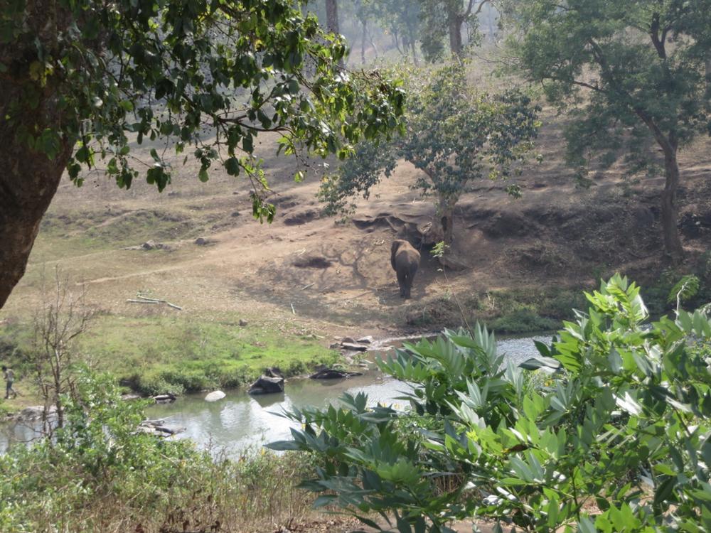 Näimme sentään elefantinkin, onneksi puron toisella puolella.