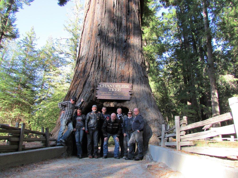 Amerikassa kaikki on suurempaa, myös puut. Illansuussa pääsemme ajamaan noin 3000 vuotta vanhan puun läpi Leggetissä.
