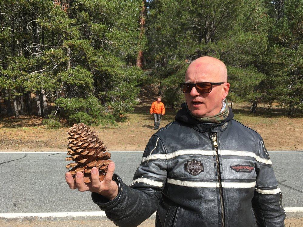 Strutsin munan kokoinen käpy läpsähtää pyöräletkan viereen juomatauon yhteydessä (kävytkin ovat Amerikassa suurempia ;) Rike nostaa sen ihmeissään ja miettii voiko kävyn viedä tuliaiseksi kotiin?  Kävyistä riippumatta suuntanamme tänään yksi Pohjois-Amerikan upeimmista luonnonpuistoista, Yosemite National Park. Yosemite on myös USA'n vanhin luonnonpuisto ja painii samassa sarjassa kuin Grand Canyon ja Yellowstone. Tänään olemme 8 Yosemiten 3,5 miljoonasta vuotuisesta kävijästä.