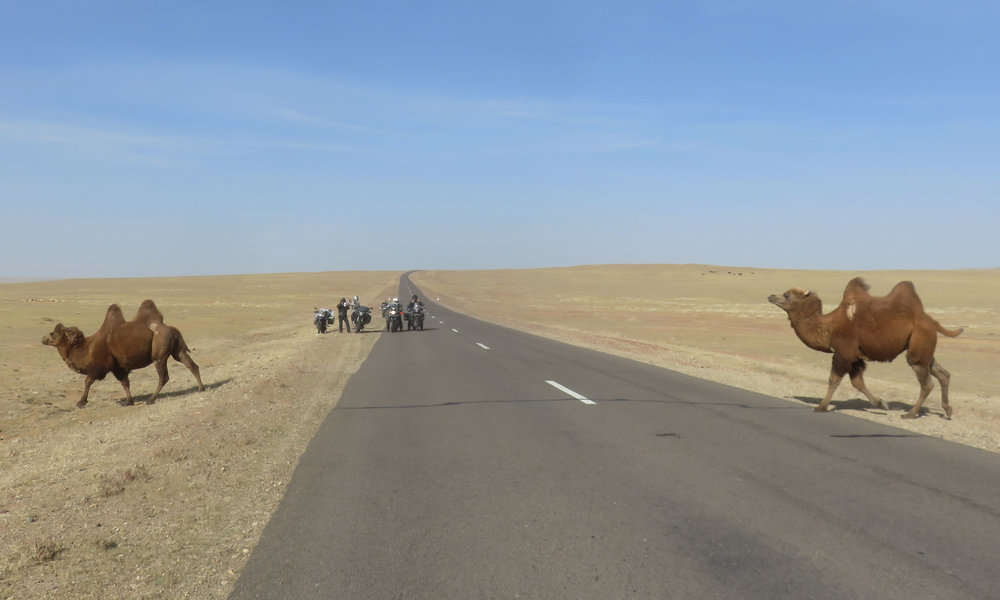 Kameleita matkalla länteen!