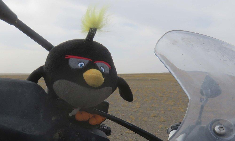 Angry Bird Finland!