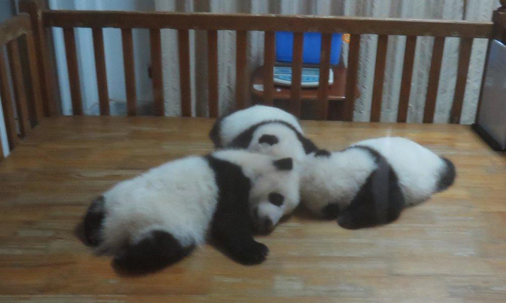 Nämä kolme ihan eläviä pikku kavereita nurseryssä!