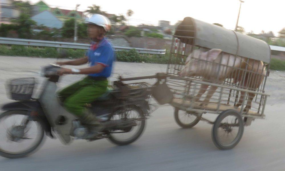 Mopolla kulkee Vietnamissa kaikki ja kaikkea!