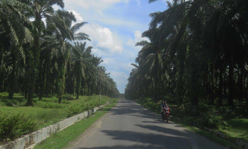 Siisti metsä on täällä samaa kuin palmuöljymetsä!