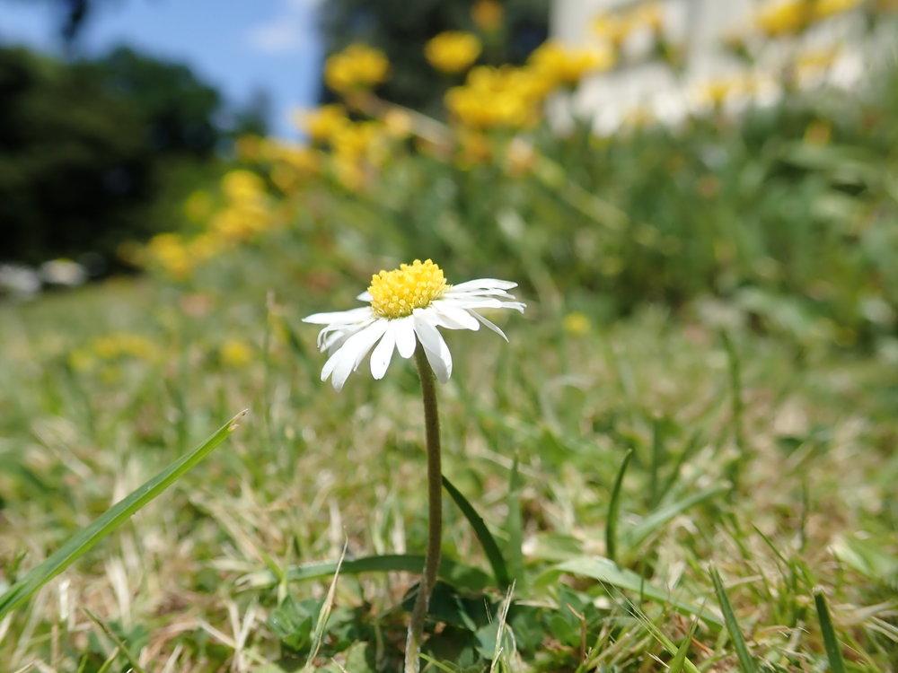 Täällä kukat kukkii ja kevät on parhaimillaan!