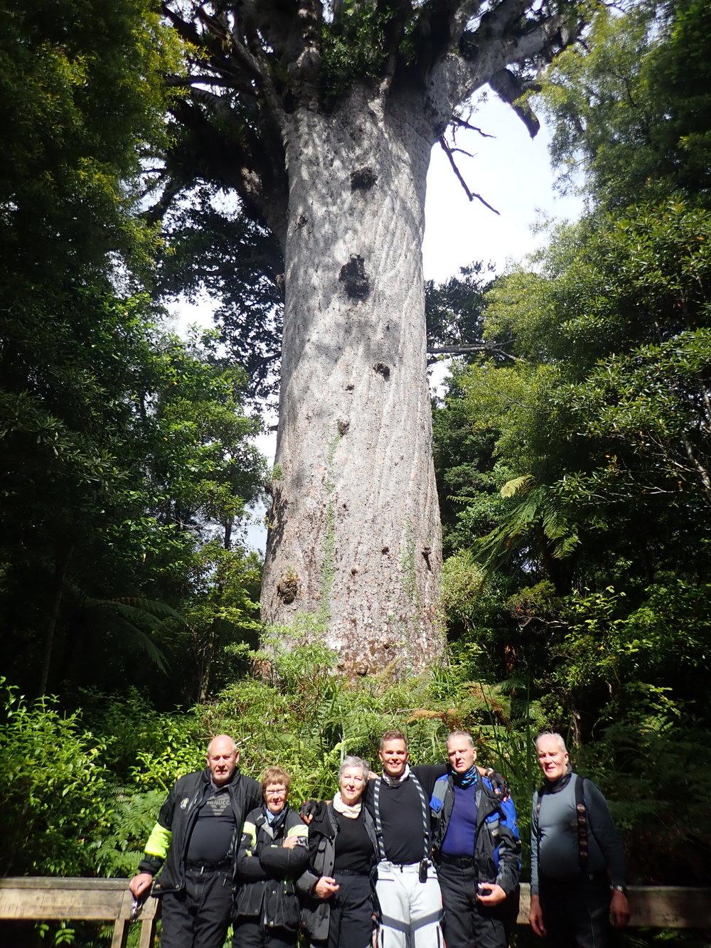 Tane Mahuta on yksi maailman suurimmista saniaispuista!