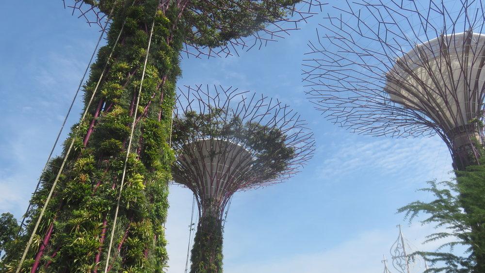 Puutkin ovat Singaporessa...
