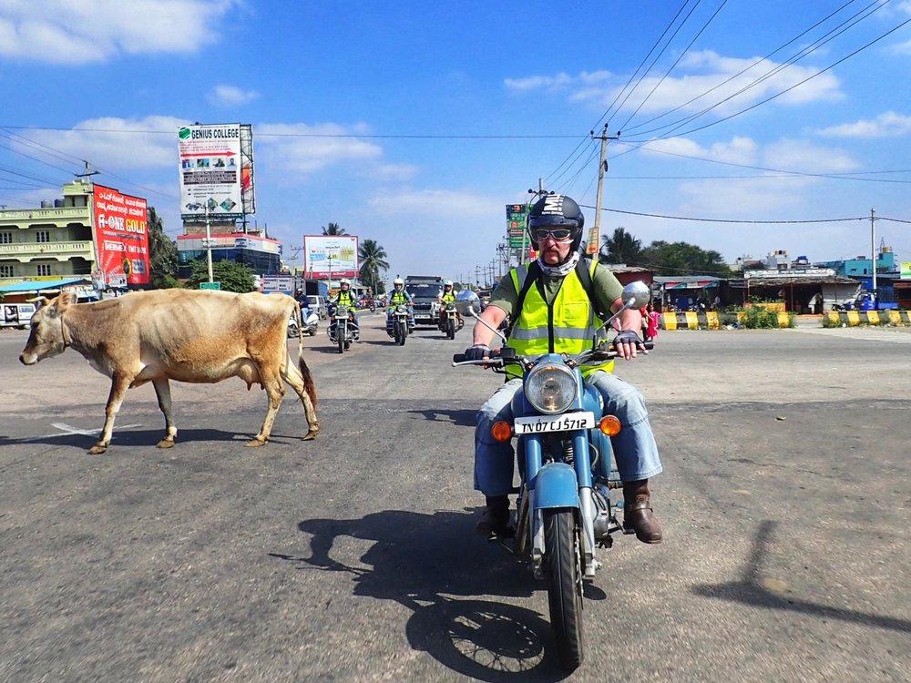 Pyhiä lehmiä kiertäen pääsimme, palatseista tuttuun, Mysoreen noin klo 16...
