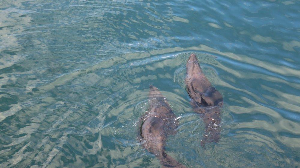 Paikallisia uimassa! :]