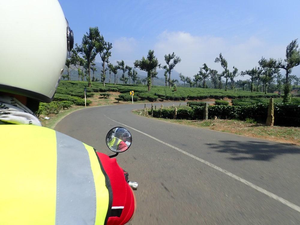 Teeplantaasien halki, taas pyhiä lehmiä väistelleen pääsimme hyvissä ajoin vuoriston yli ja Maduraita kohti vievälle tielle...