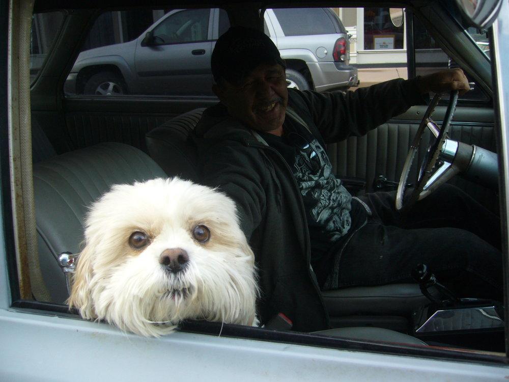 Silver Cityläinen koira ilta-ajelulla. Ilsen piti pysäyttää auto kuvausta varten ;)