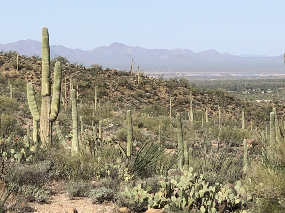 Maisema kuin länkkäristä, kaktuksia kasvaa silmän kantamattomiin.